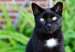 A black cat with a white spot and striking yellow eyes.