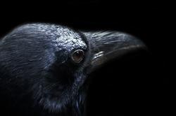 A black crow face Attractive