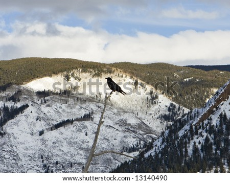 A black crow perched at the top of a dormant tree is highlighted against the mountains near Aspen, Colorado.