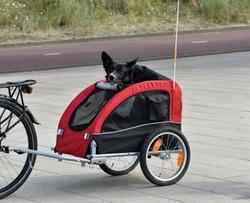 A black dog in a bike trailer.