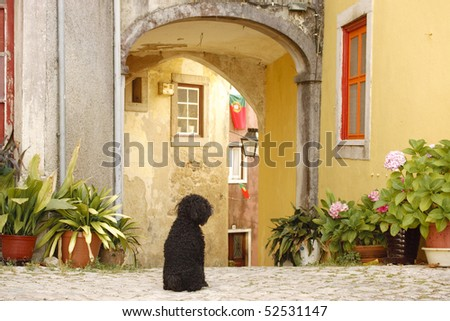 A black dog is sitting on the cobblestones at the entrance to an arched courtyard surrounded by old-world homes in Sintra, Portugal. Potted plants line the walls. Horizontal shot.