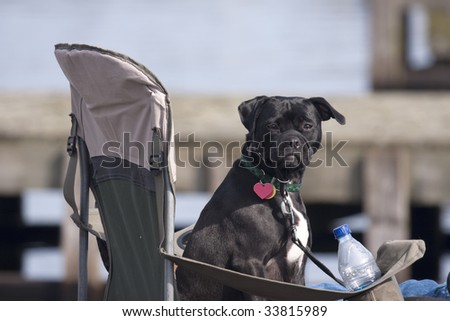 A black dog is watching a crew regatta from his chair with a water bottle.