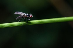 A black fly sits on a lush blade of grass while the sun is shining.