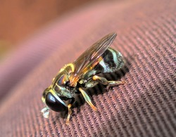 a black Hover insect perched on the cloth