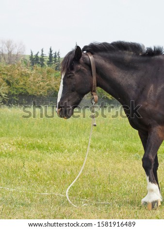 a black male horse resting on the field