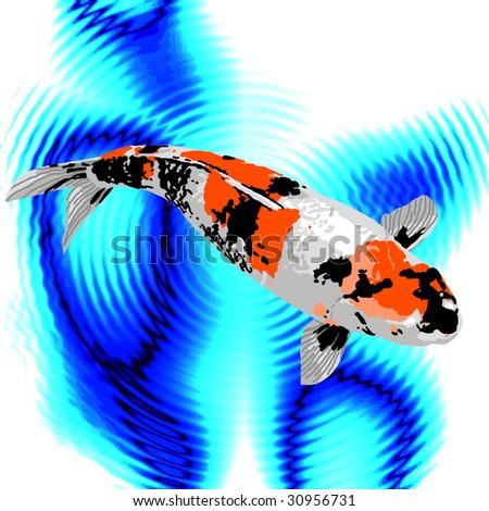 A black orange and white koi swimming peacefully in a for Orange and black koi