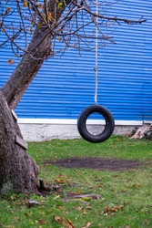 A black round rubber tire swing hangs from a large tree with the assistance of a white cable rope. The ground is grass covered with autumn leaves. A blue building or house is in the background.