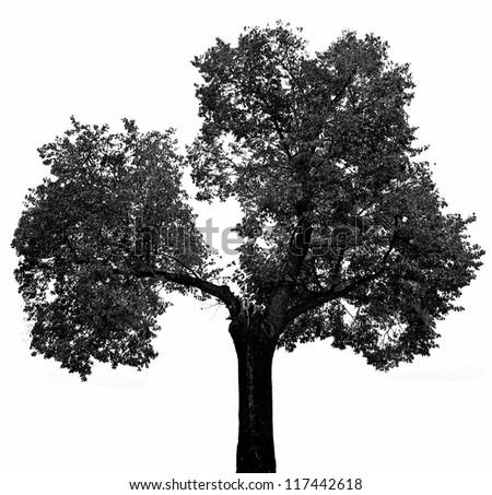 a black tree silhouette on white
