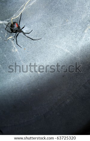 A Black Widow spider in her web under a metal lid. - stock photo