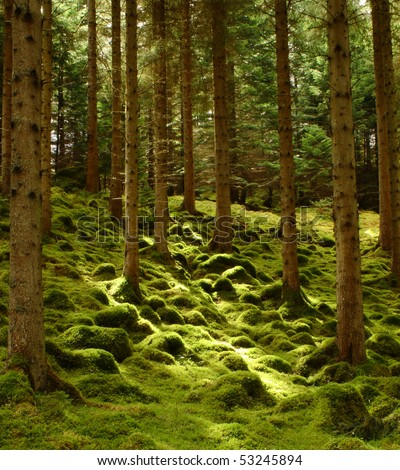 A blanket of moss covers a forest floor in Scotland