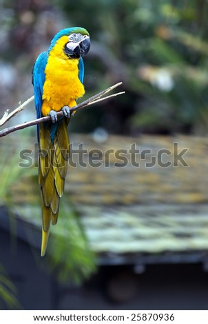 A blue and yellow parrot sits peacefully on a tree branch