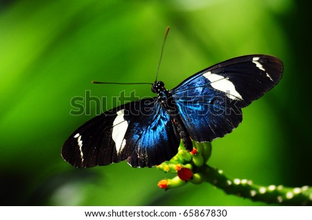 a blue butterfly over a flower