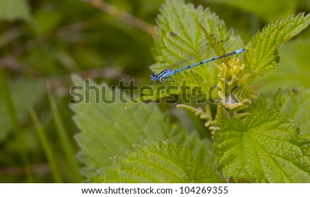 a blue dragon fly and green leafs