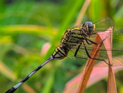 a blue dragonfly perched on the weeds