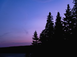 A Blue Hour Sunset in Maine with a large blank area with a moon above a silhouette of trees.