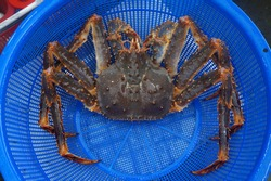 a blue king crab on the basket