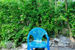 A blue plastic chair in the center against a backdrop of green leaves