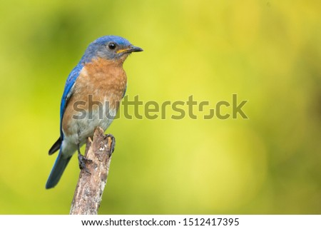 A bluebird perched in the summer.