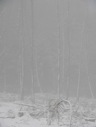 A blurry view of the winter forest covered in fog on a gloomy day