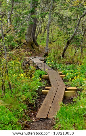 A board walk along the Appalachian Trail in Vermont with yellow spring flowers