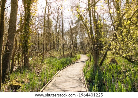 A boardwalk footpath leading through a UK woodland in spring. The buds of new leaves are illuminated by the low afternoon sun. Stock photo ©