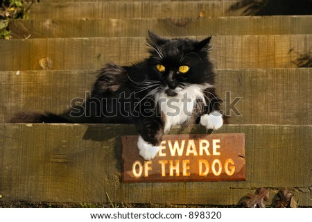 """A bold cat ignores the """"Beware of Dog"""" sign."""
