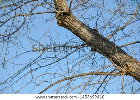 a bold trunk and bold branches against the sky