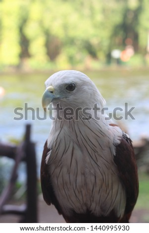 a bondol eagle that looks very fierce and sharp #1440995930