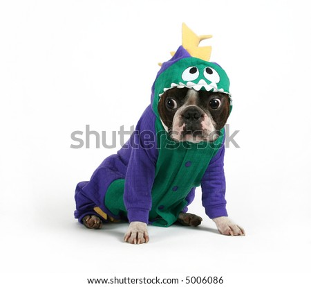 a boston terrier in a dinosaur costume