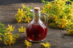 A bottle of St. John's wort oil with fresh Hypericum flowers