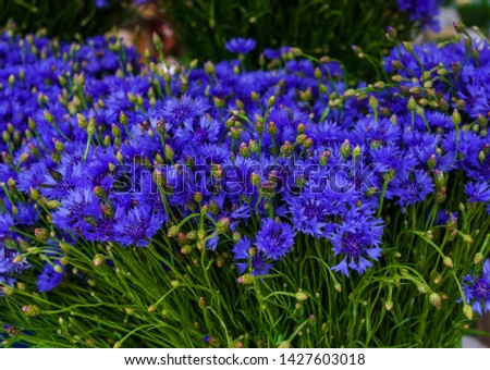 A bouquet of field cornflowers on the table in a vase #1427603018