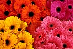 A bouquet of gerberas. Floral background. Floral pattern.