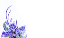 A bouquet of lilac flowers on a white background. Spring flower arrangement. Background for greeting cards, invitations.