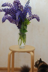 A bouquet of lupines in a glass vase. Lupins in the water at home. A bunch of weeds. Beautiful purple flowers. Long flowers. Plants with seeds. Plants at home. Summer bouquet of wildflowers.