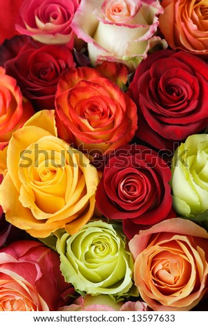 A bouquet of multi-coloured roses. Focus on middle roses.