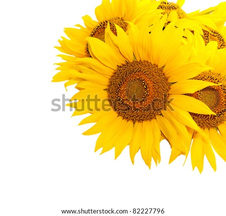 A bouquet of sunflowers. Close-up. Studio