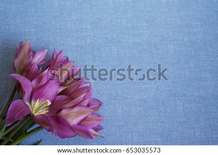 A bouquet of tulips flowers on the light blue background. Full frame flat lay pic with copyspace.
