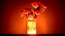 a bouquet of tulips in a vase with bright red illumination - an unreal gift of a vampire