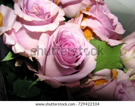 Clipart Rose Dying, Clipart Rose Dying Transparent - Rose With Thorns Png,  Png Download - vhv
