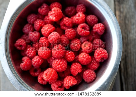 A bowl of freshly picked garden raspberries