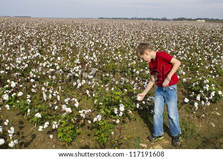 A boy examines a box of cotton in cotton field