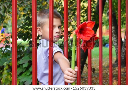 A boy gives a red flower through a fence. A child in captivity. A teenager looks through a trellised fence. Orphanage. Take a child an orphan. Give flowers.