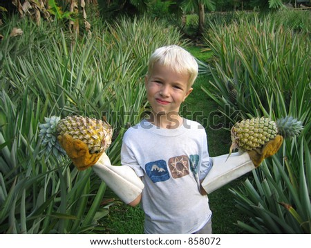 A boy holds two pineapples, in a pineapple garden