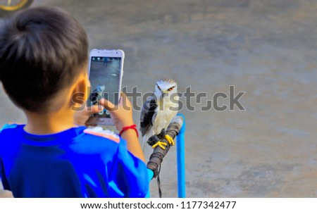 A boy is holding a phone to take a picture of a falcon.