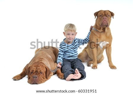 A boy with his Pet Friends - huge dogs isolated on white background
