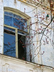 a branch of a tree with spring buds looks into the broken window of a thrown house