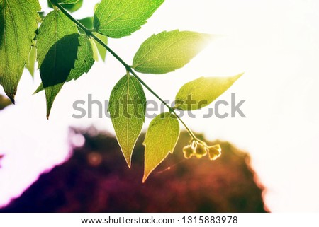 A branch of plant exposed to sunlight. Flares of sunlight through leaves. #1315883978