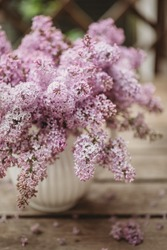 A branch of sirens on a tree in a garden, park. Beautiful flowering flowers of lilac tree at spring. Blossom in Spring. Spring concept. Branch of lilac flowers with  leaves. Blossoming lilac flower.