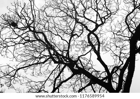 A branch of tree #1176589954
