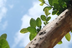 A branch of tree with green leaves.